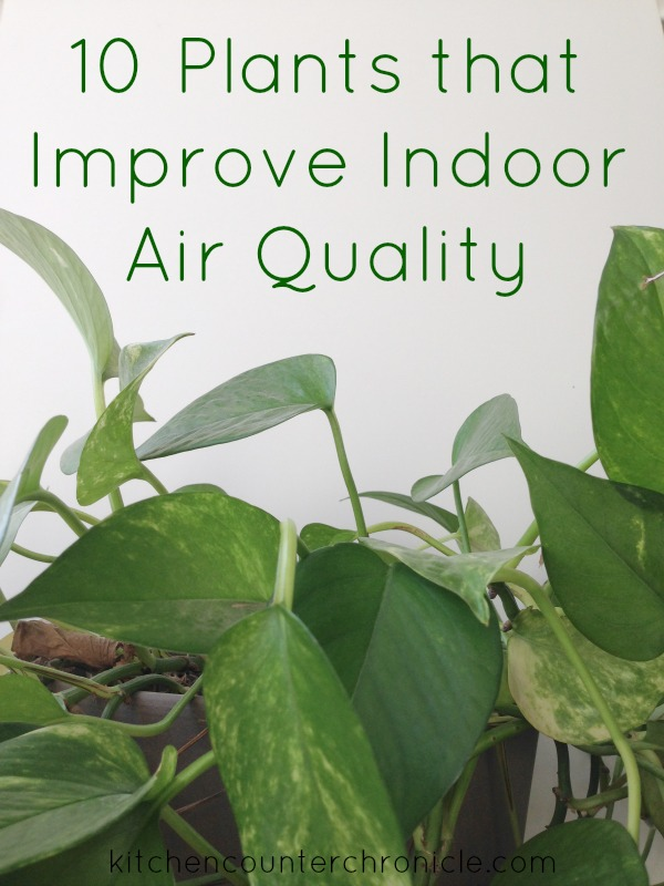 10 Plants that Improve Indoor Air Quality