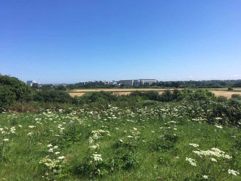 Kitchener camp in the distance - the location of the old Kitchener camp, bought and developed by Pfizer, as seen from Richborough fort, 2018