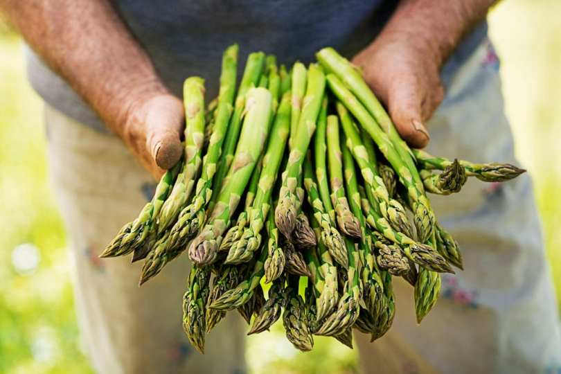 Someone holding up a bunch of Asparagus.