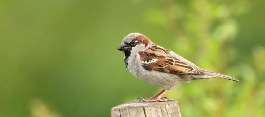 RSPB Big Garden Birdwatch results