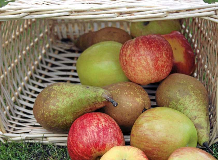 A basket of apples and pears.