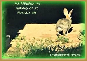 jack rabbits