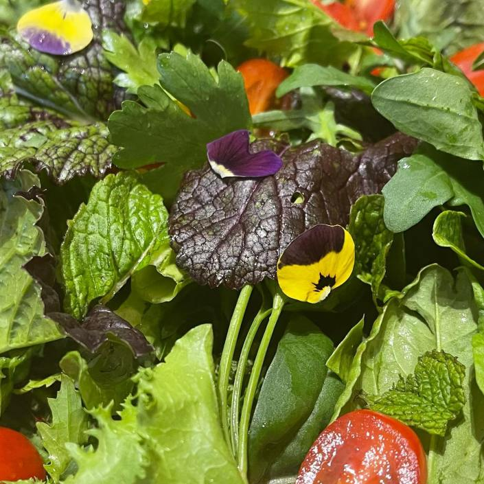 Pic of Salad from Campo Gardens