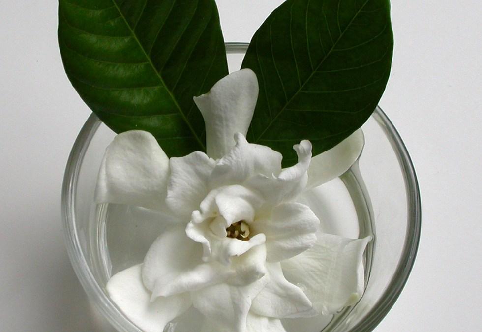 Gardenia Ice Cream