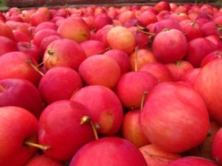applesmain