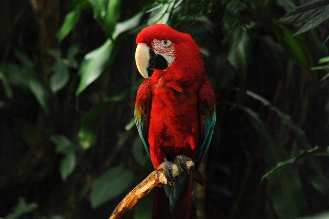 Meet one of the 100 free-flying birds at the Bloedel Conservatory. Image Credit: Vandusengarden.org