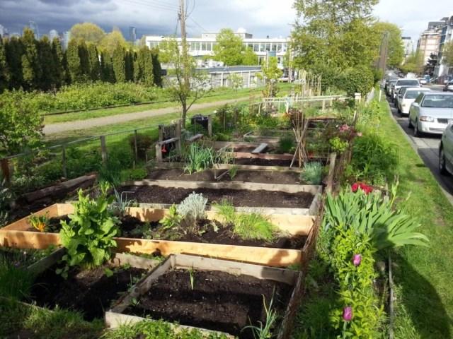 Image: Cypress Community Garden