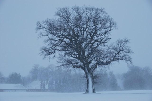 LynnCopeland_Photo_Snowy tree