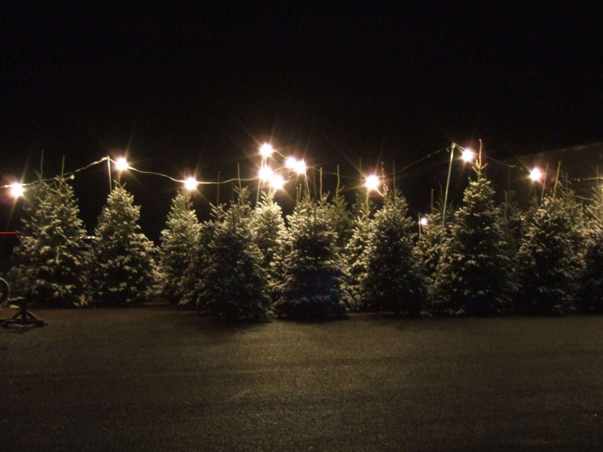 Where To Buy A Christmas Tree Near Kitsilano