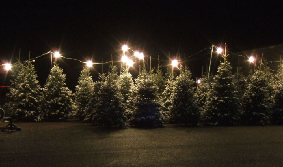 Where To Buy A Christmas Tree Near Kitsilano