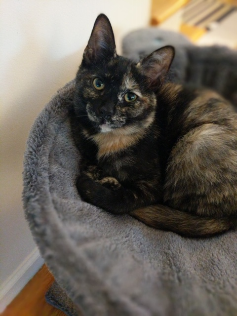 Tory the Torti