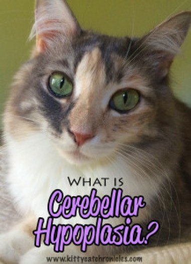 What is Cerebellar Hypoplasia?
