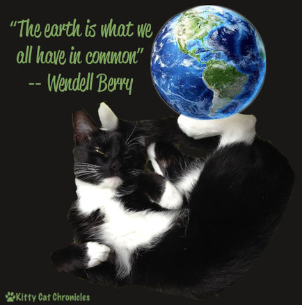 earth day 2015 kitty cat chronicleskitty cat chronicles tails of adventure cats handicats. Black Bedroom Furniture Sets. Home Design Ideas