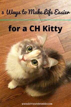 3 Ways to Make Life Easier for a CH Kitty
