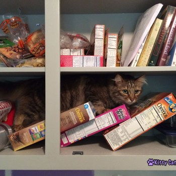 Caster in the Cabinets - Caught Red Handed