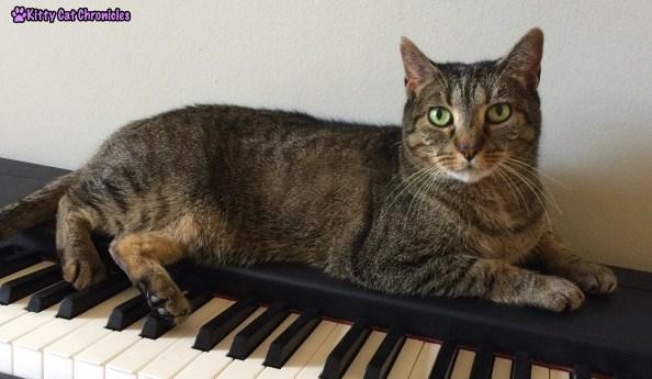 Sassy on a Piano