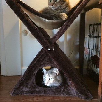 Hanging out with Caster & Sophie - Cat Teepee