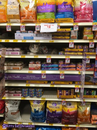 Celebrate the Year of the Cat with Wellness: Sophie at Petsmart