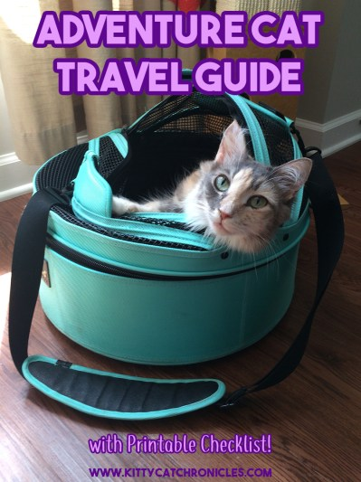 Adventure Cat Travel Guide: Everything You Need!