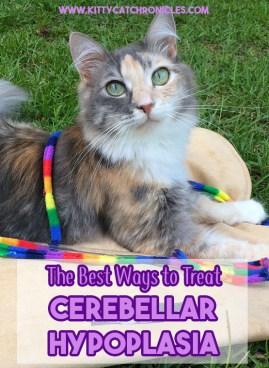 The Best Ways to Treat Cerebellar Hypoplasia