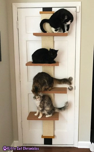 The 2017 Holiday Gift Guide for Adventure Cat Lovers - Cat Climber