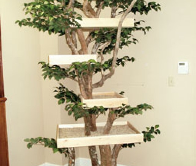 The Best Way To Get A Cat Tree That Looks Like A Tree Is To Build Your Own You Can Take A Small Tree And Add Shelves To It