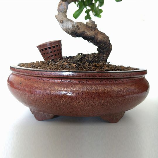 cestini portaconcime per bonsai