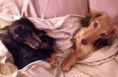 Past Pups 2