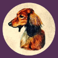 Kiva Dachshunds app icon (114)