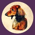 Kiva Dachshunds app icon (120)