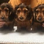 Past Pups 13