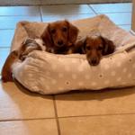Past Pups 20