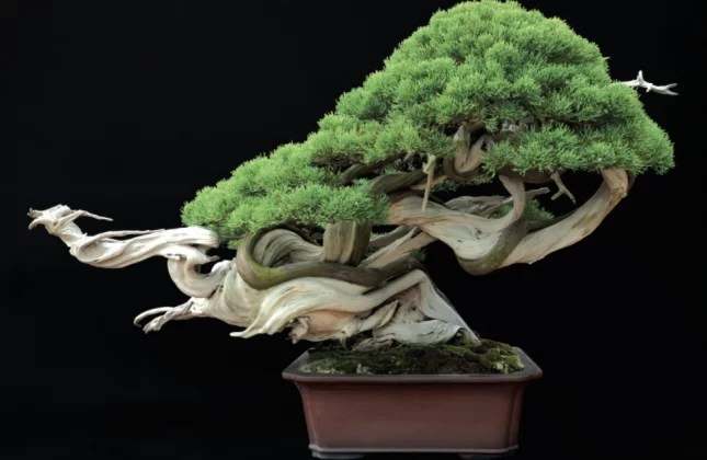 Make your own Bonsai tree