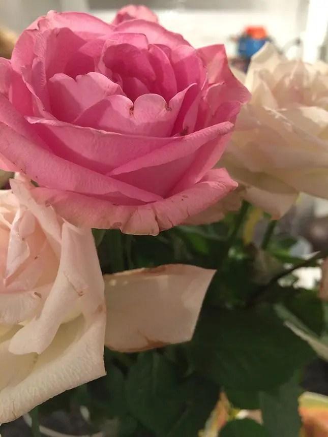 make your own bath salts rose petals