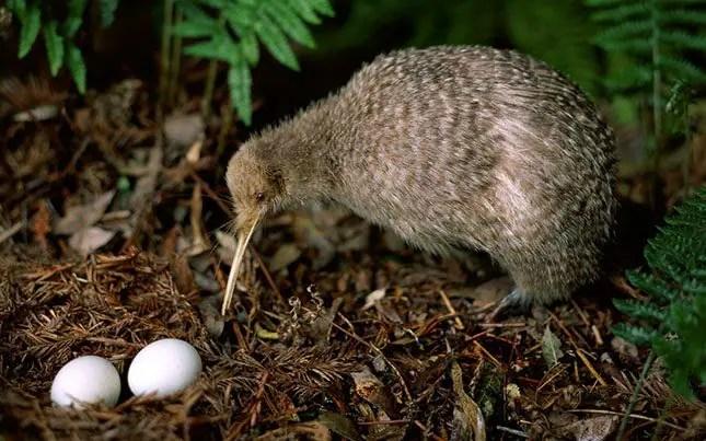 Kiwi spotting New Zealand