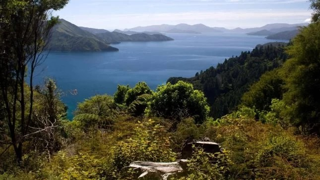 queen-charlotte-track-things to do in Picton