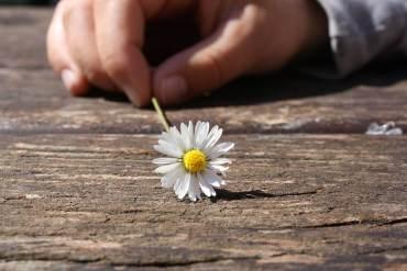 daisy-75190_1920