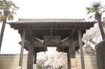 山高神代桜130329_08