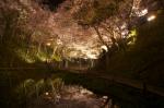 池に写る桜雲橋