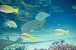 サンシャイン水族館