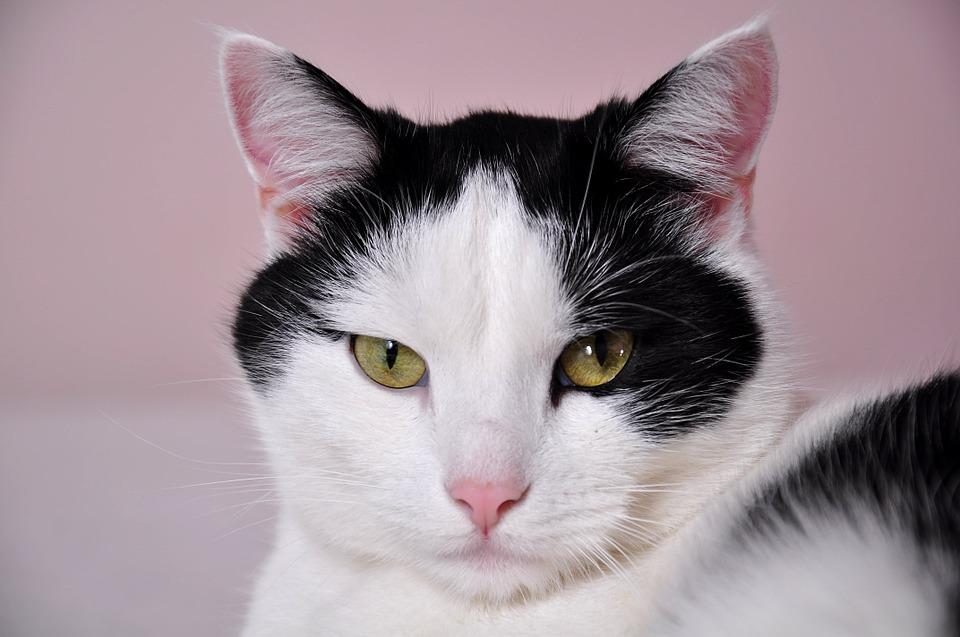 Hold kattene unna blomsterløkene - to gode råd