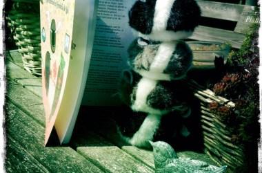 Soarecii acrobati Miaurice citesc Planeta de Aur