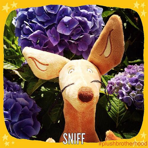 Sniff - The Plush Brotherhood