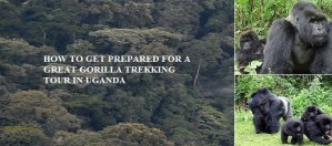 How to get prepared for a great gorilla trekking tour in Uganda