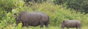 18 Days Uganda and Rwanda wildlife safaris