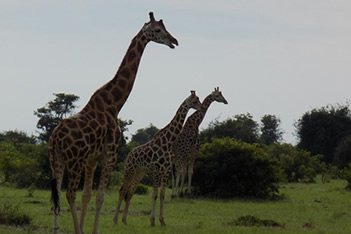 3 Days Murchison Falls Encounter