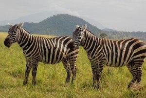 9 Days Holiday Safari in Uganda and Rwanda