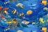 Lima Species Baru Ikan Ditemukan di Nusa Penida
