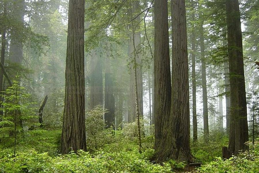 Hutan Indonesia Hadapi Tekanan Berat