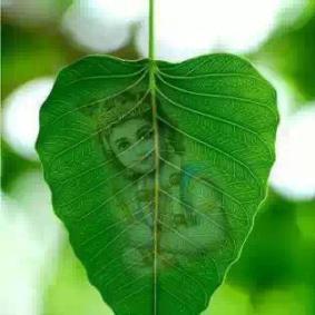 krsna in a leaf